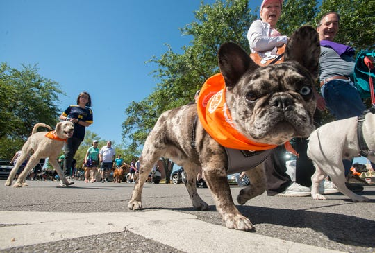 Hundreds of animal lovers took to the streets of downtown Pensacola for Paws On Palafox, a family friendly 3K dog walk to support the Barbara Grice Memorial Low Cost Spay and Neuter Clinic at the Pensacola Humane Society.