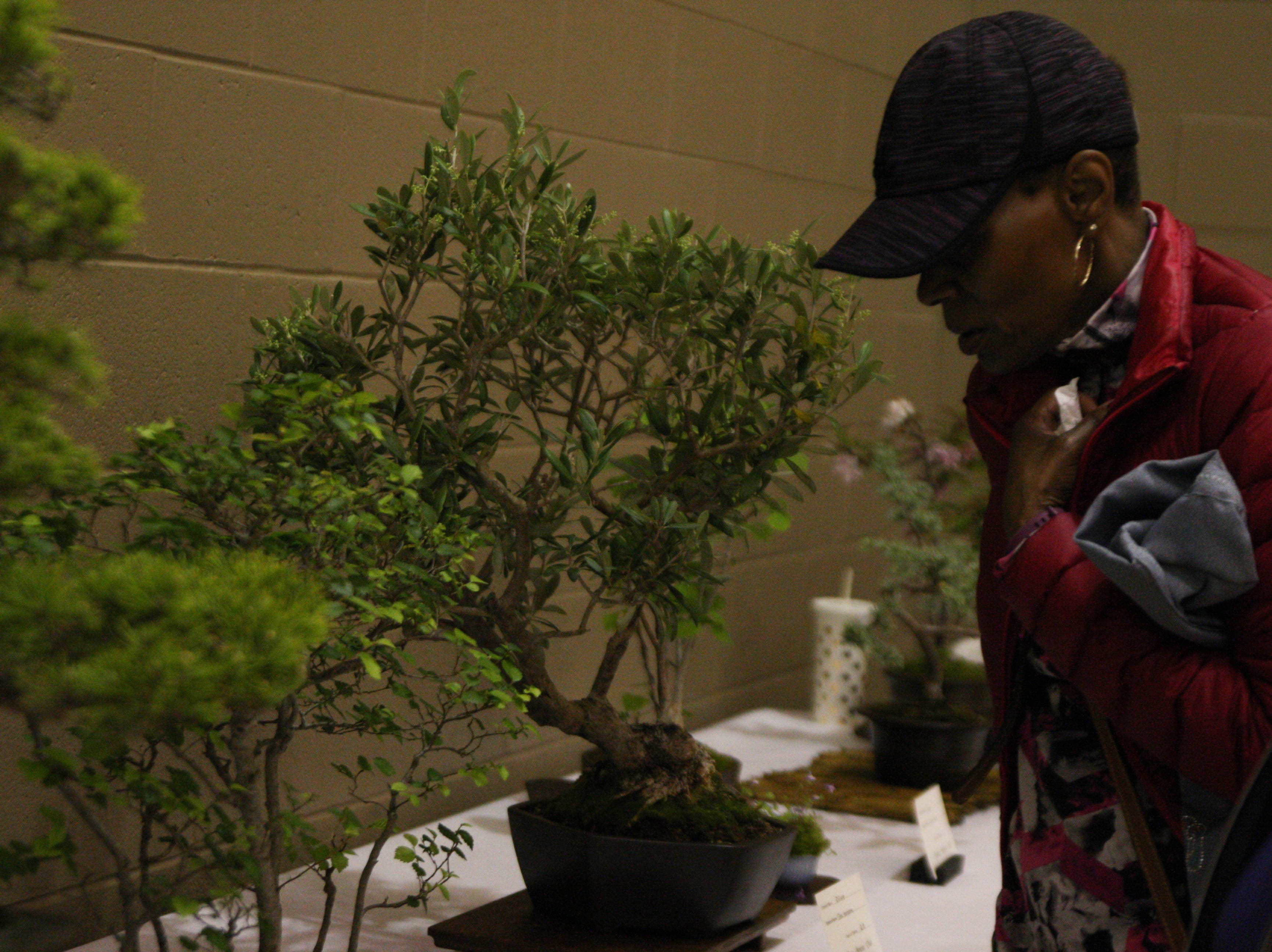 A woman looks at different examples of bonsai trees. April 27, 2019.