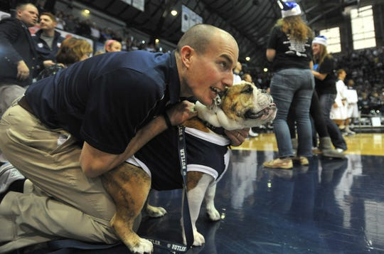Butler mascot handler Michael Kaltenmark keeps a tight leash on mascot Trip during player introductions before the game as the Butler Bulldogs defeated the Ball State Cardinals 67-53 at Hinkle Fieldhouse Saturday December 1, 2012.