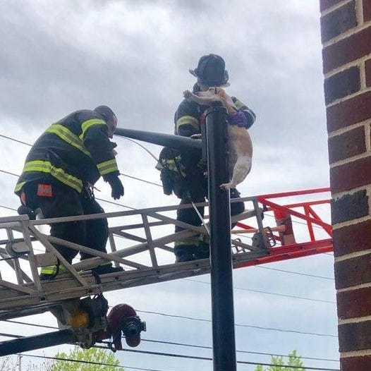 NJ dog, impaled on lamp post and suspended 20 feet in air, will make full recovery after rescue