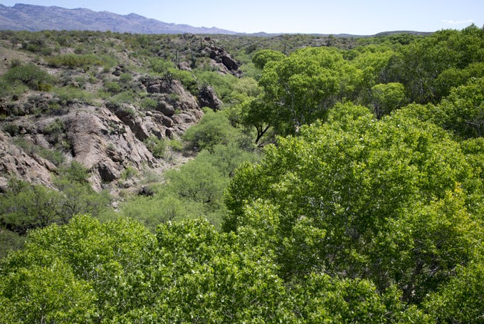 Opponents of the proposed Rosemont Mine say they fear the project would harm Cienega Creek, which nourishes an oasis in the desert near Tucson.