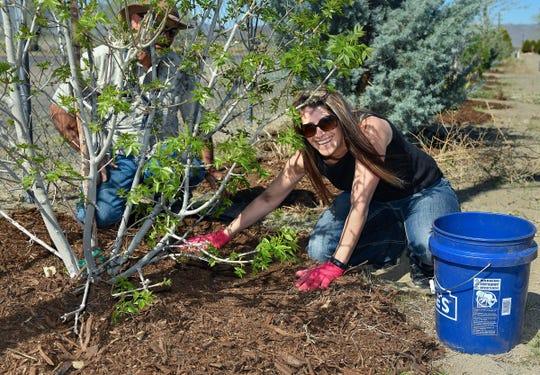 Fernley City Attorney Brandi Jensen spreads mulch around plantings at Fernley's Desert Memorial Garden Cemetery.