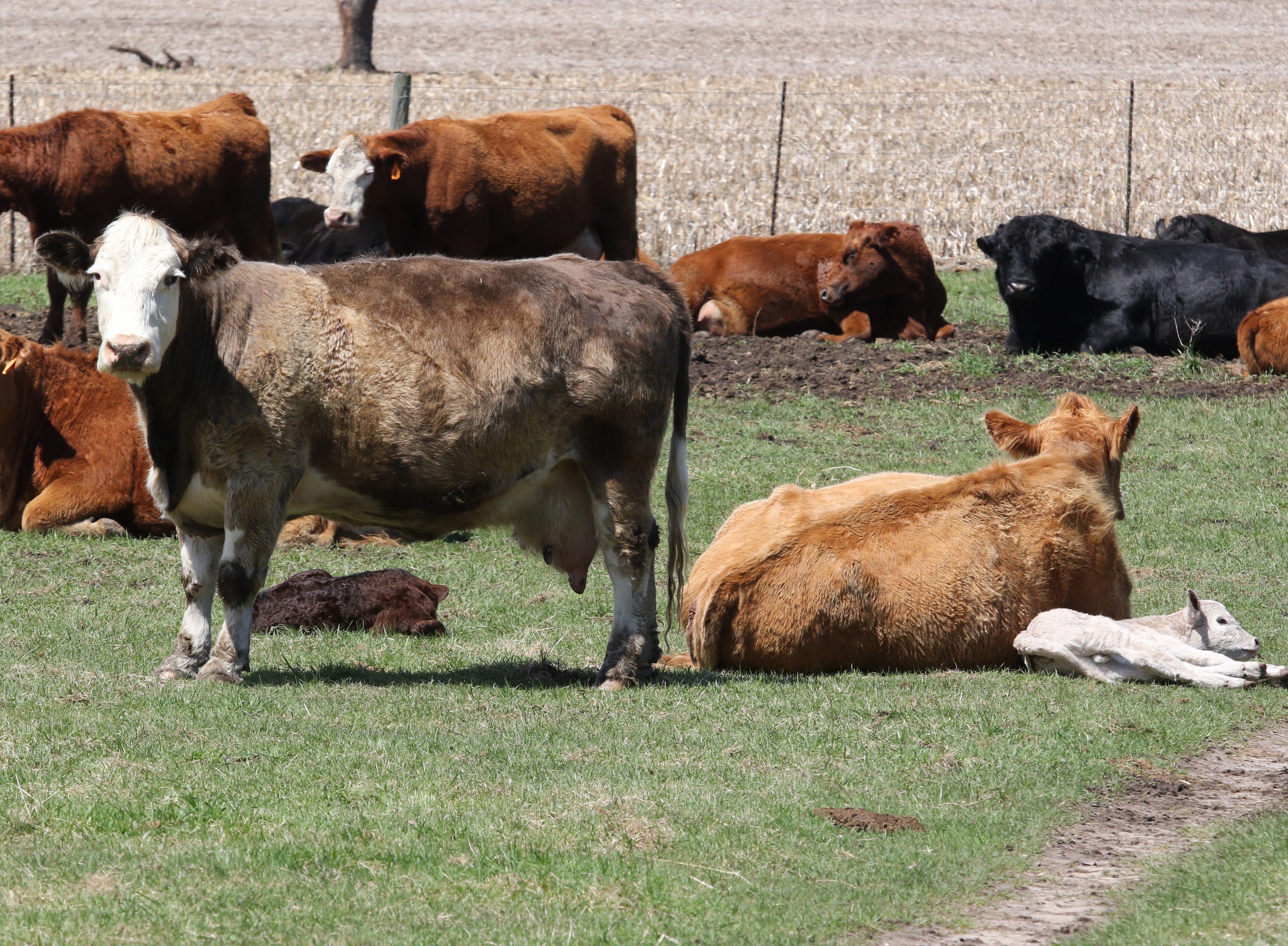 U.S. beef gains full access to Japan