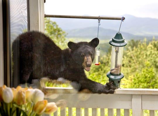 A bear approaches a bird feeder on a second-floor deck.
