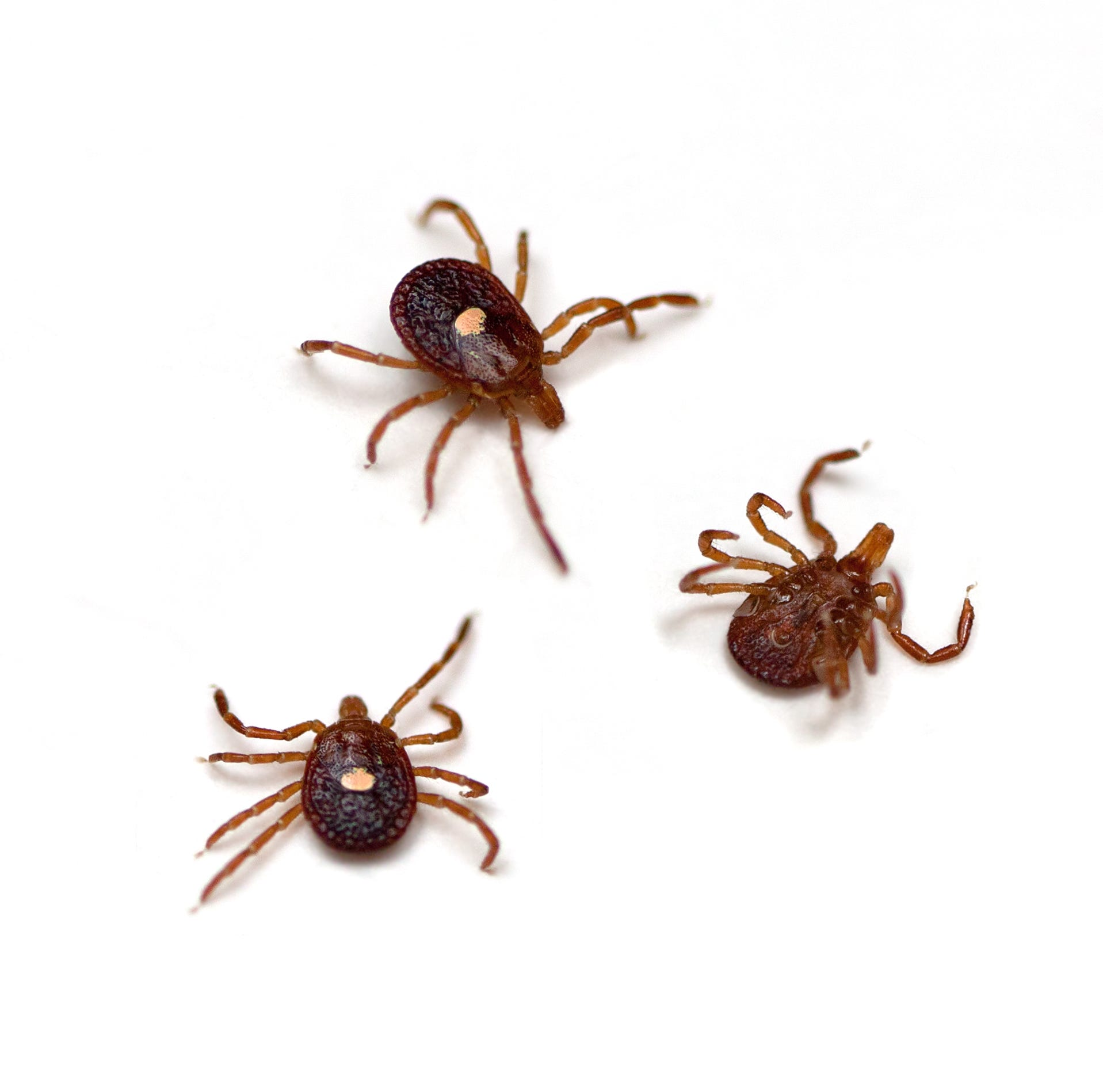 RIdeout: Watch out for ticks