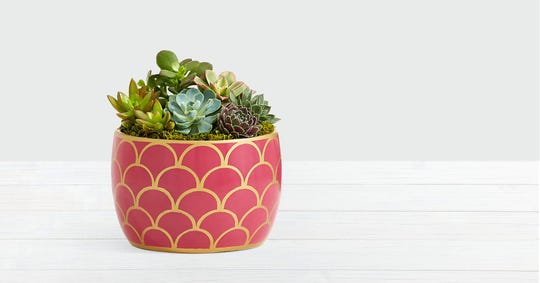 A pretty pot of succulents can be a longer lasting option than flowers or food for a special delivery.