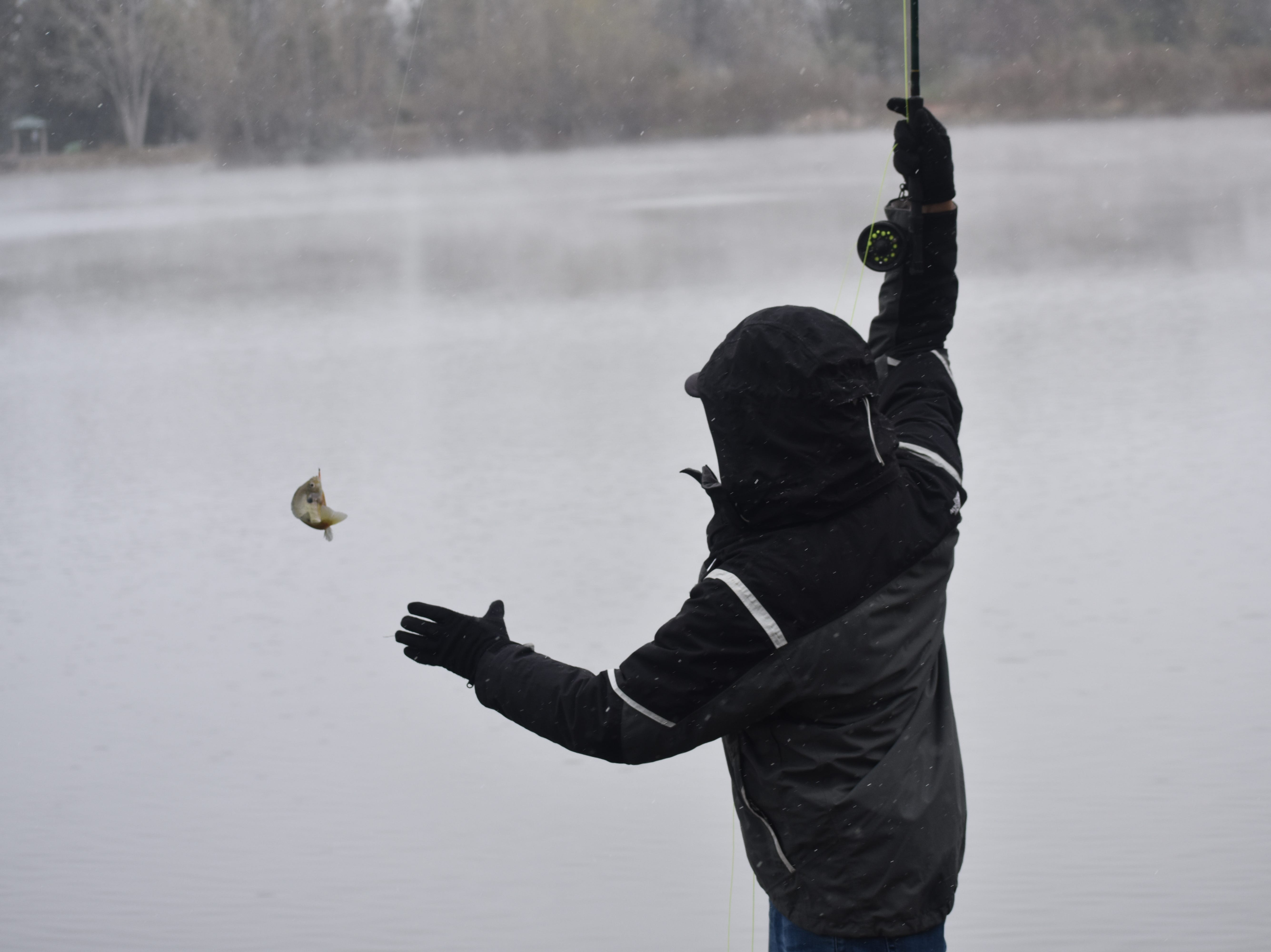 C.J. Duran of Johnstown lands a small bluegill with his fly rod at City Park Lake during the start of Monday's snowstorm.