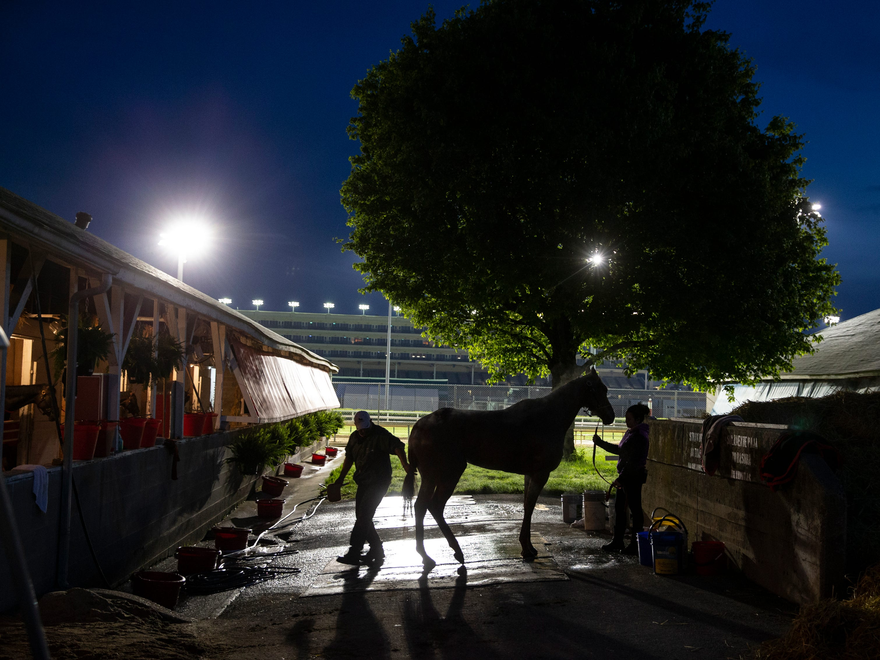 Light from the race track illuminates a thoroughbred being bathed on the backside of Churchill Downs.  April 29, 2019