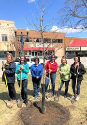 Lakeside Foods office employees planted an oak tree at Washington Park on April 26 in honor of Arbor Day.