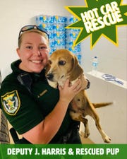 An Escambia County Sheriff's deputy rescued a beagle from a hot car Sunday at Pensacola Beach.