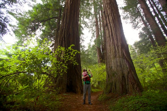 While floating down the Smith River, you can stop at many groves of giant trees at Jedediah Smith Redwoods State Park, just south of the Oregon and California state line.