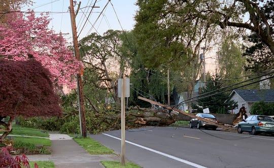 A tree fell across Center Street early Monday.