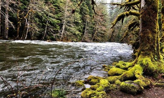 Salmon River along the Old Salmon River Trail