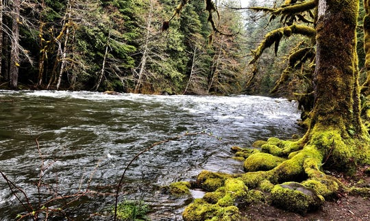 Salmon River along the Old Salmon River Trail