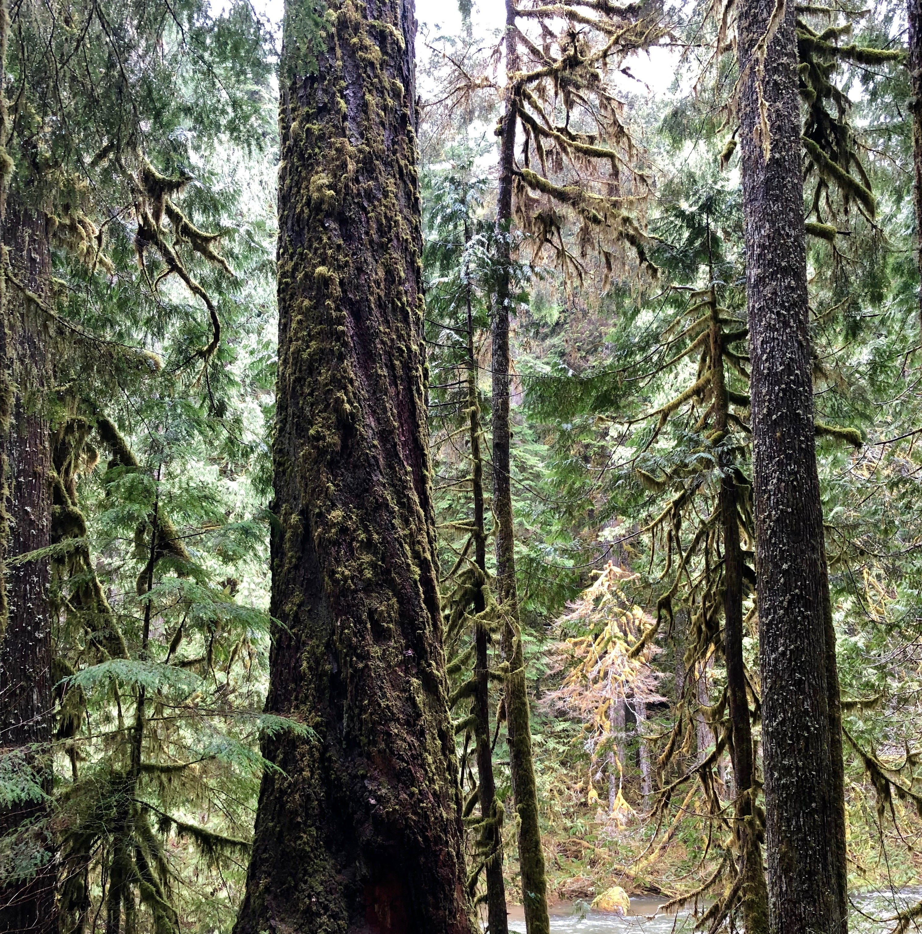 Naturalist's Eye: Old Salmon River Trail
