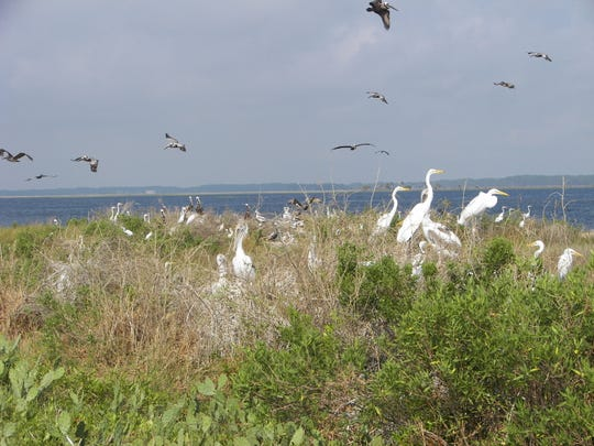 St. Marks National Wildlife Refuge celebrated the donation of 20-acre Smith's Island, a significant bird rookery near Shell Point