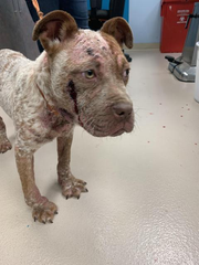Arnold was brought to the South Jersey Animal Shelter by the Millville animal control officer