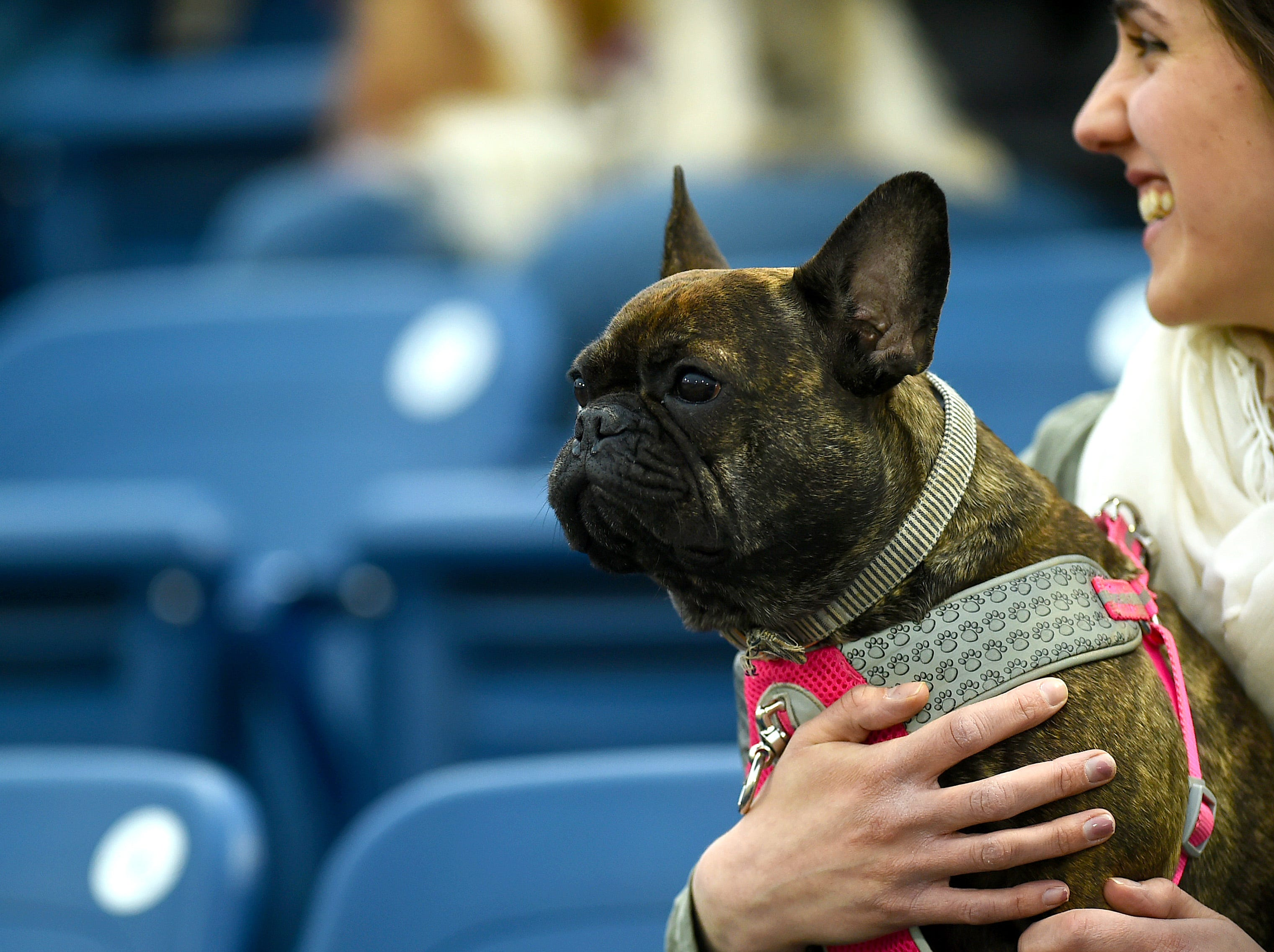 Penny and her owner Maura Reilly of Binghamton watch as the Binghamton Rumble Ponies take on the Akron RubberDucks at NYSEG Stadium, April 29, 2019.