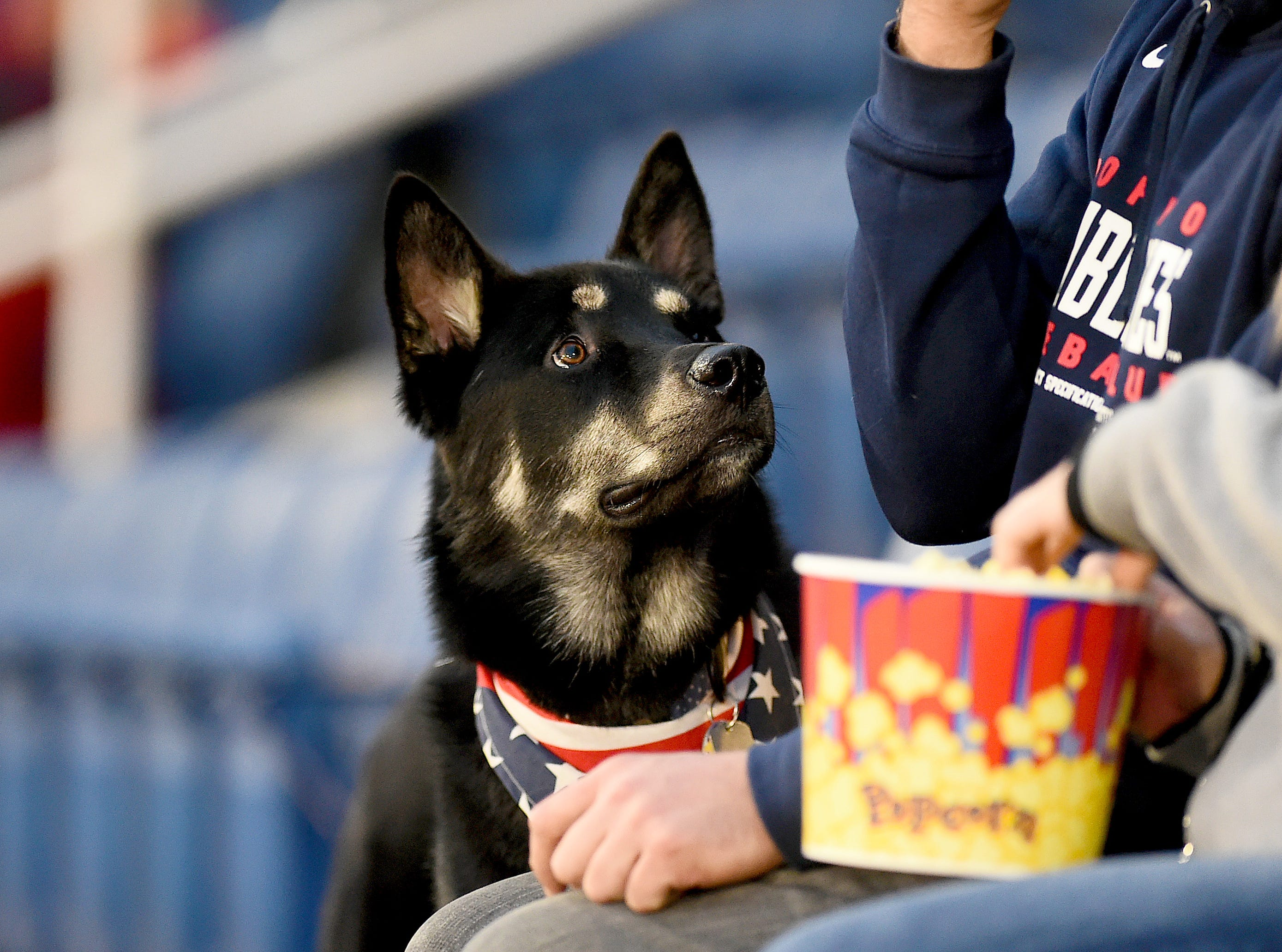 Tucker looks up at his owners during Mutt Monday as the Binghamton Rumble Ponies hosted the Akron RubberDucks at NYSEG Stadium, April 29, 2019.