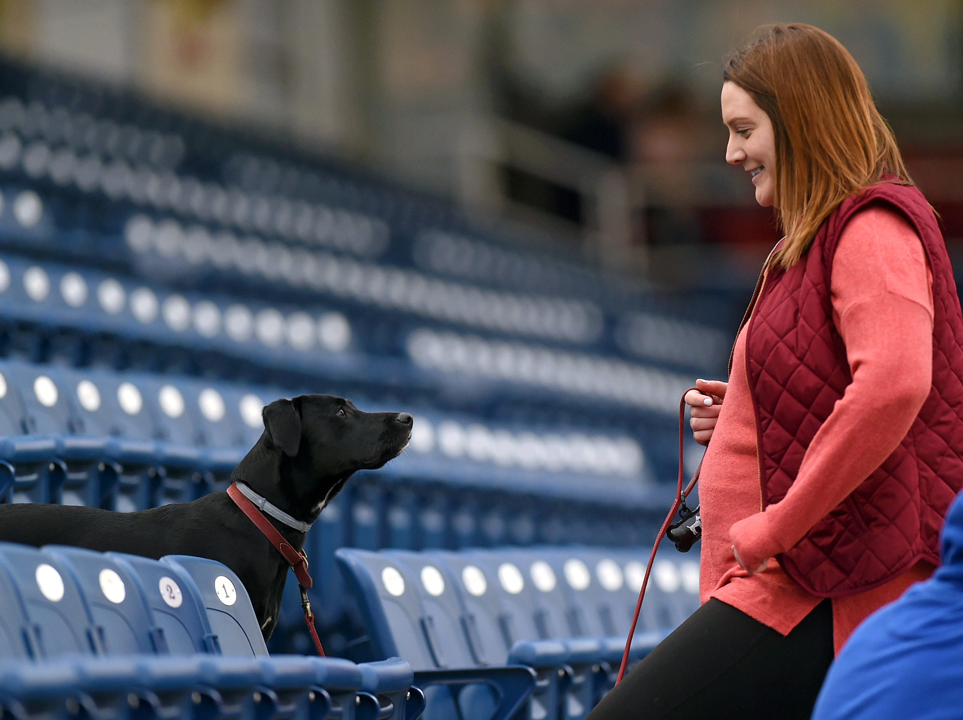 Misha, a lab mix, looks up at owner Keeley Fitzgerald of Binghamton during Mutt Monday as the Binghamton Rumble Ponies hosted the Akron RubberDucks at NYSEG Stadium, April 29, 2019.