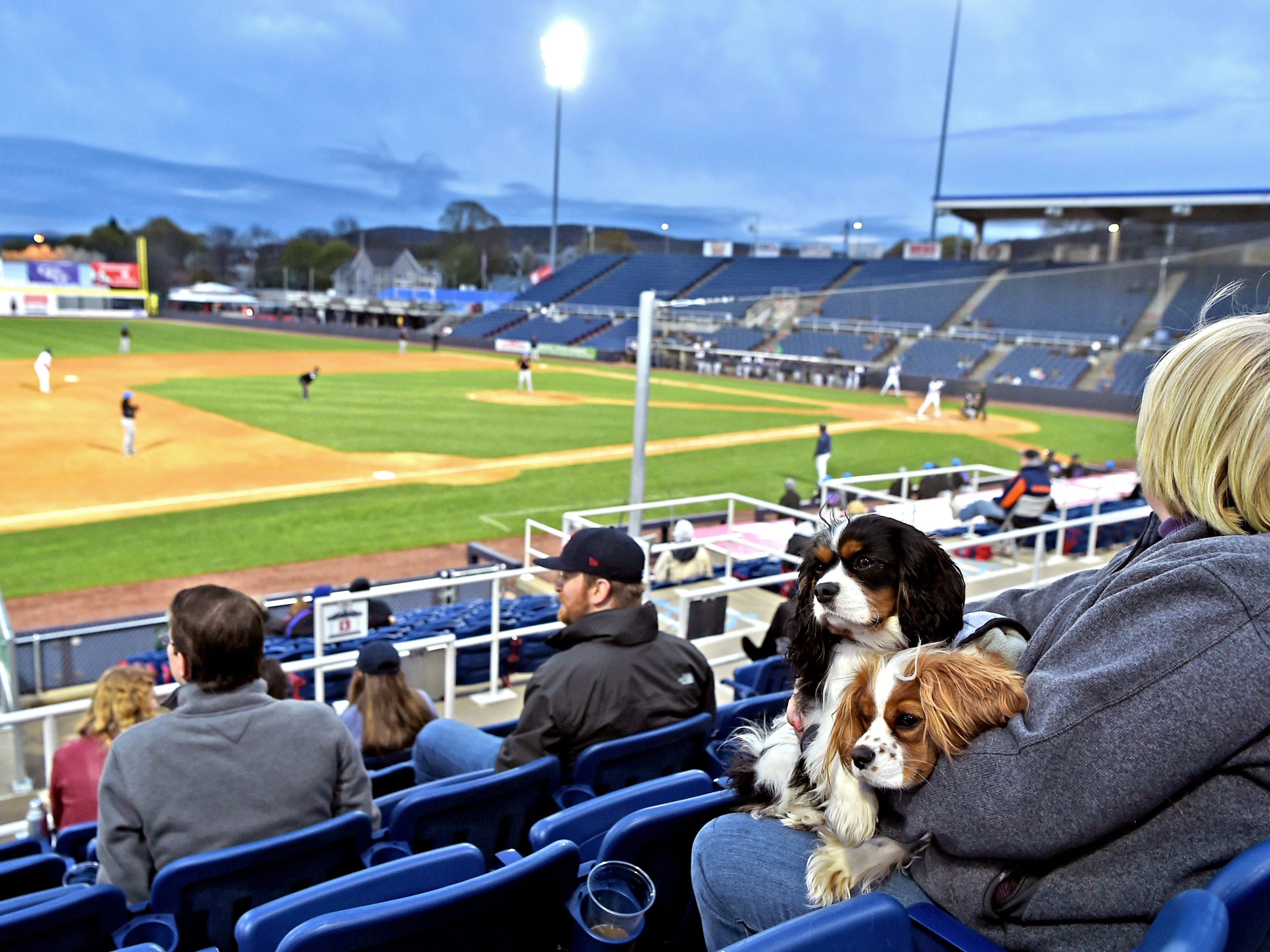 Mutt Monday as the Binghamton Rumble Ponies hosted the Akron RubberDucks at NYSEG Stadium, April 29, 2019.