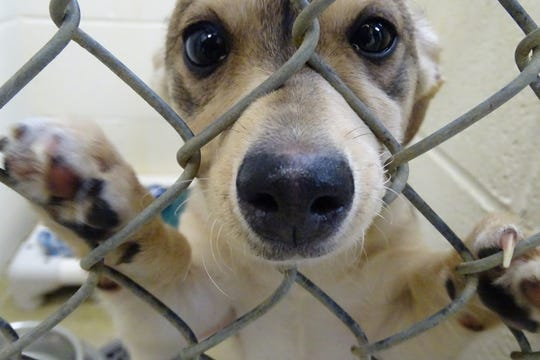 A new arrival peers out of its kennel at the Humane Society Serving Crawford County shelter on Tuesday, which was National Adopt a Shelter Pet Day.