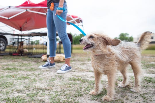 Luna the dog stones outside the Garden Estates of Corpus Christi with other dogs from the Gulf Coast Humane Society  as they hope to be adopted during National Adopt a Shelter Pet Day on Tuesday, April 30, 2019.