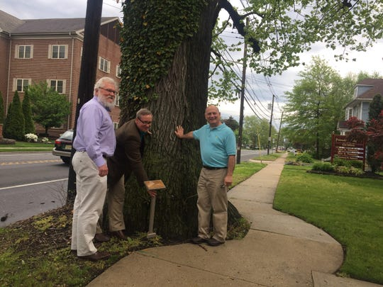Audubon Commissioners Robert Lee and Rob Jakubowski, along with Camden County Freeholder Jeffrey Nash show a plaque that will mark a 226-year-old elm tree along the White Horse Pike.