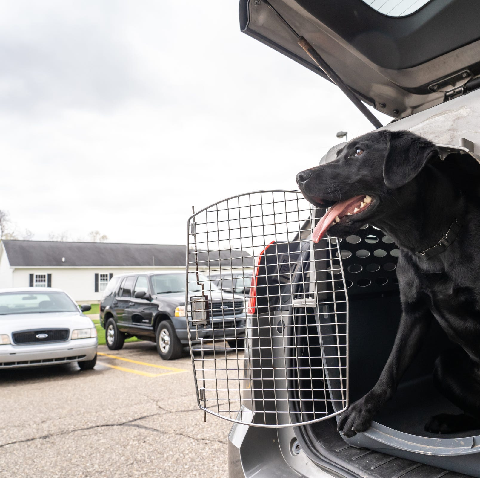 Michigan schools are hiring these dogs to help prevent shootings