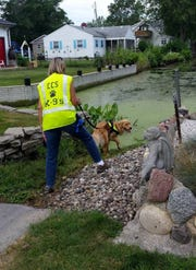 Kenna and her handler, Laura Symonds, investigate a canal in a neighborhood near Lake Erie to determine the cause of an algal bloom there in 2015. The pair will reteam this summer for a similar project in Hillsdale County.