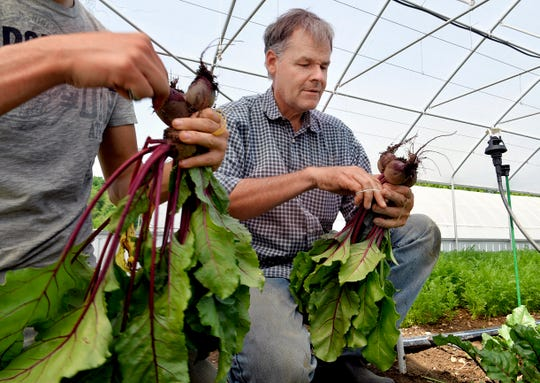 """John Dysinger works harvesting beets with his son, Joshua,on their Bountiful Blessings Farm in Williamsport, Tenn. on Monday, April 29, 2019. John Dysinger was tapped to serve as spiritual adviser for death row inmate Donnie Johnson in 2006 and then visited him for years with his wife and kids, who grew up knowing """"Uncle Don."""""""