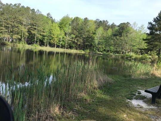 Vegetation has now grown back around Bainbridge Park pond in Ocean Pines.