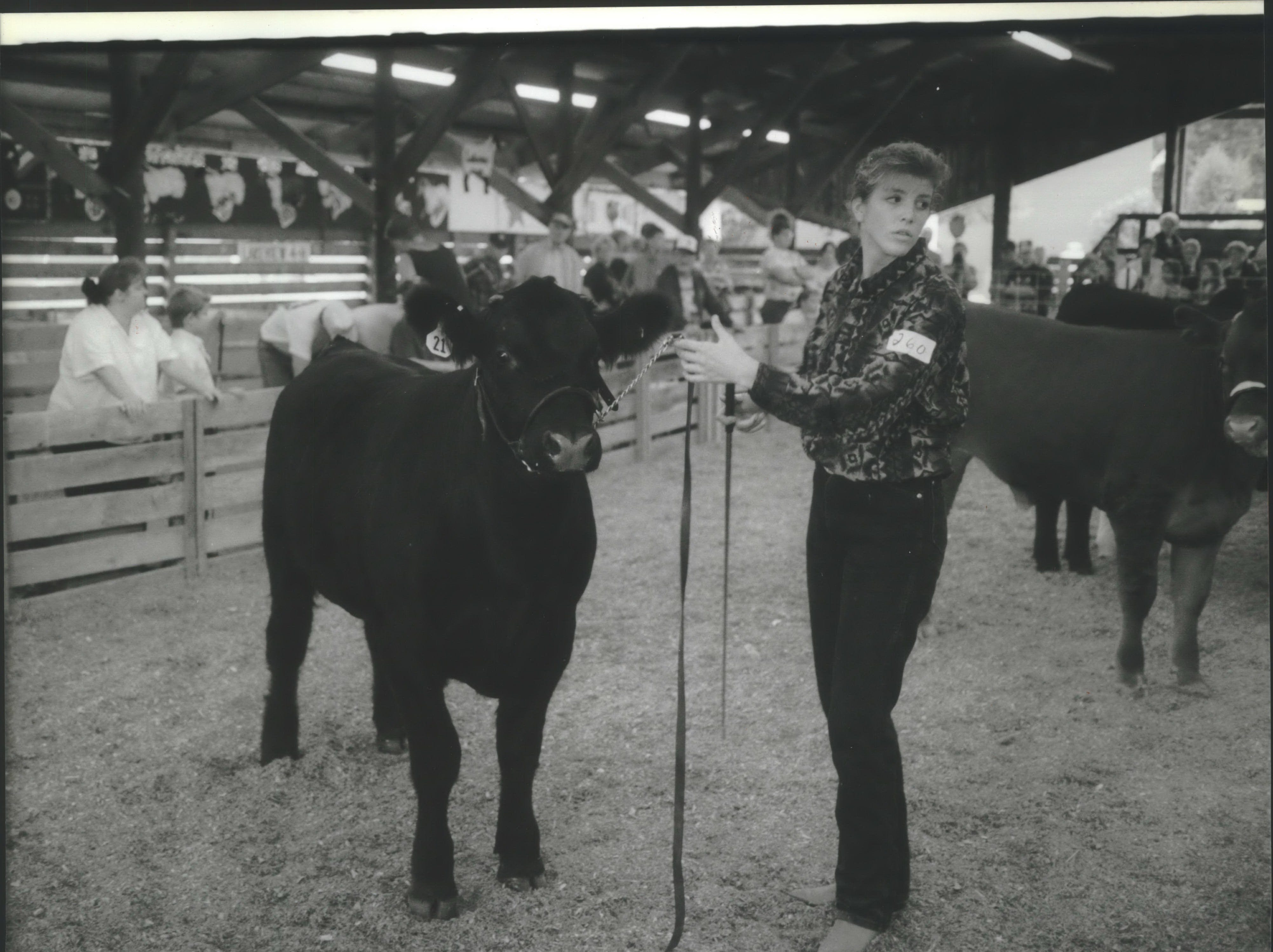 The 135th Ozaukee County Fair is drawing people in at Fireman's Park in Cedarburg. An estimated 40,000 to 50,000 people are expected to attend. Trina Rathky waits for the nod a a judge points out fine points on her lightweight crossbred during livestock judging on Thursday. Rathke, who won a blue ribbon, is from Fredonia.