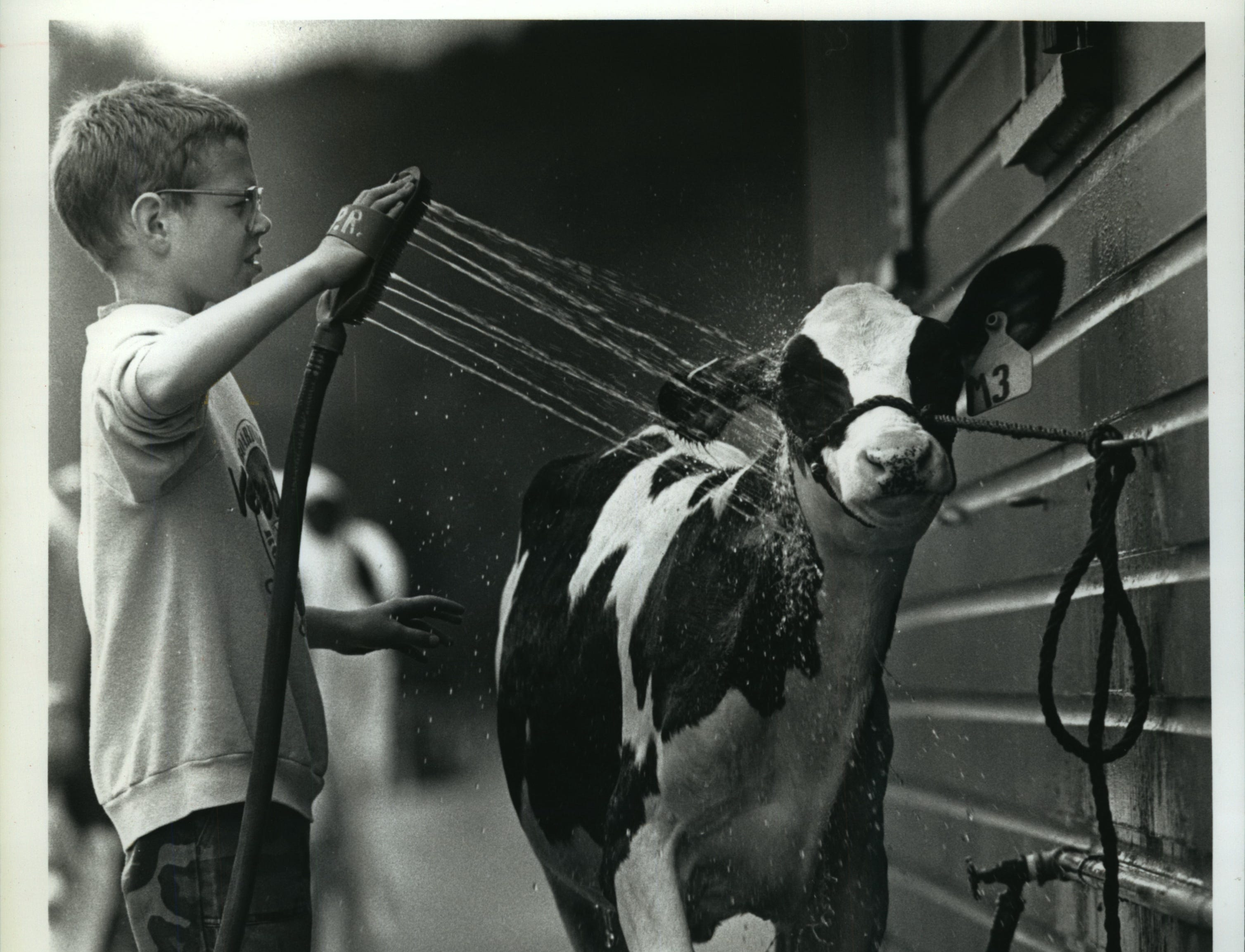 Paul Roemer, 10, of Hartford, is eager for his 5-month-old Holstein heifer to look her best at the Washington County Fair, especially because she is Paul's first-ever entry.