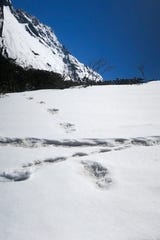 In this handout photo taken by the Indian Army on April 9, 2019, large foot prints are seen in the snow, sighted by the Indian Army, near the Makalu Base Camp in the North-Eastern Himalayas.