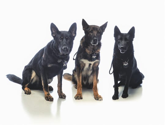 The Appleton Police Department's K-9 program has three dogs working patrol and specializing in the detection of either narcotics or explosives.