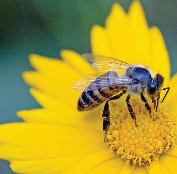 """""""Honey Bees: One of Our Favorite Pollinators,"""" is scheduled for Tuesday, May 7, from 1 to 2 P.M.at Leonard J. Buck Garden, 11 Layton Road in Far Hills."""