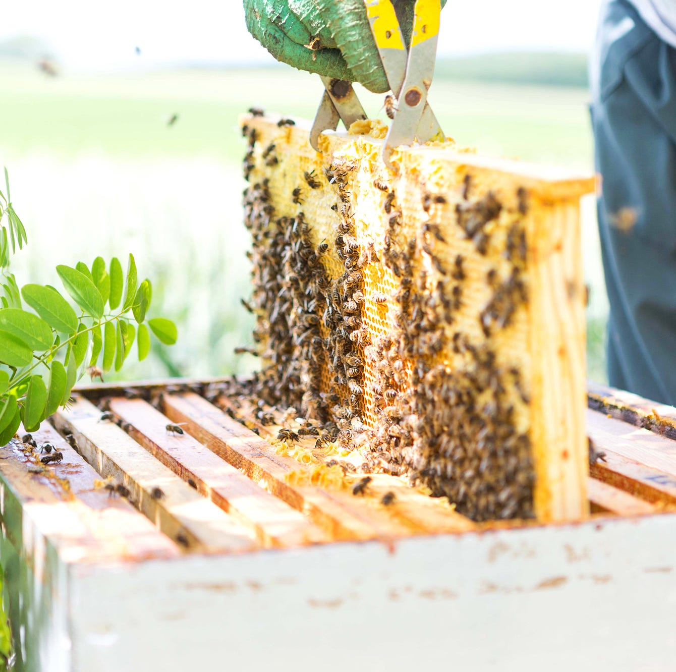 Home Advisor: 5 tips for aspiring beekeepers