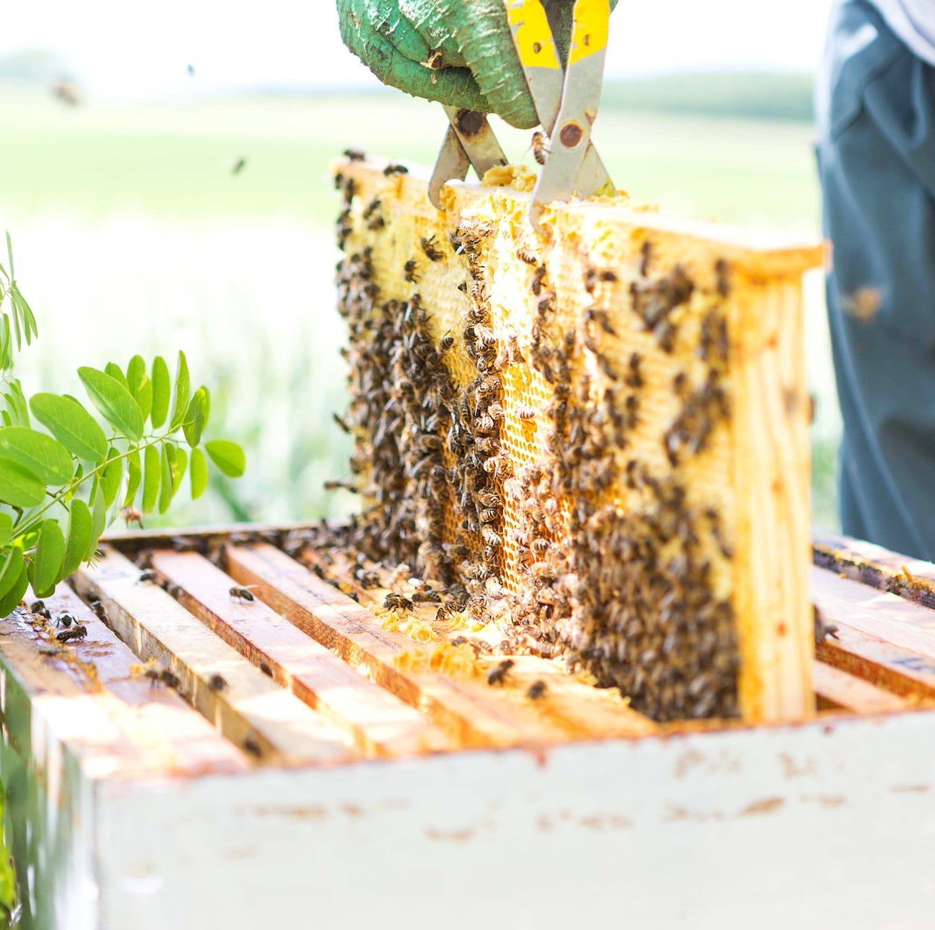Home Advisor: 5 tips for aspiring beekeepers