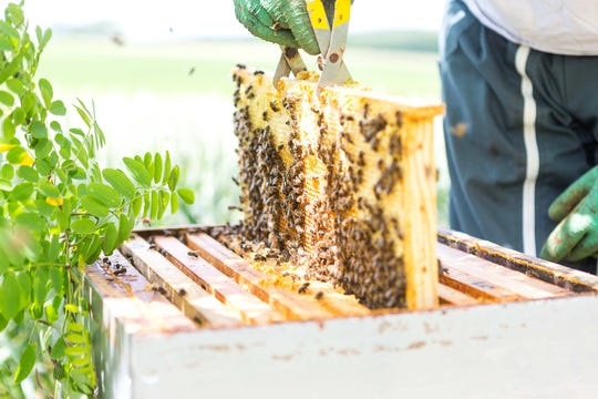You'll get the best results from bees acquired locally, as they'll already be acclimated to your area. (Dreamstime)