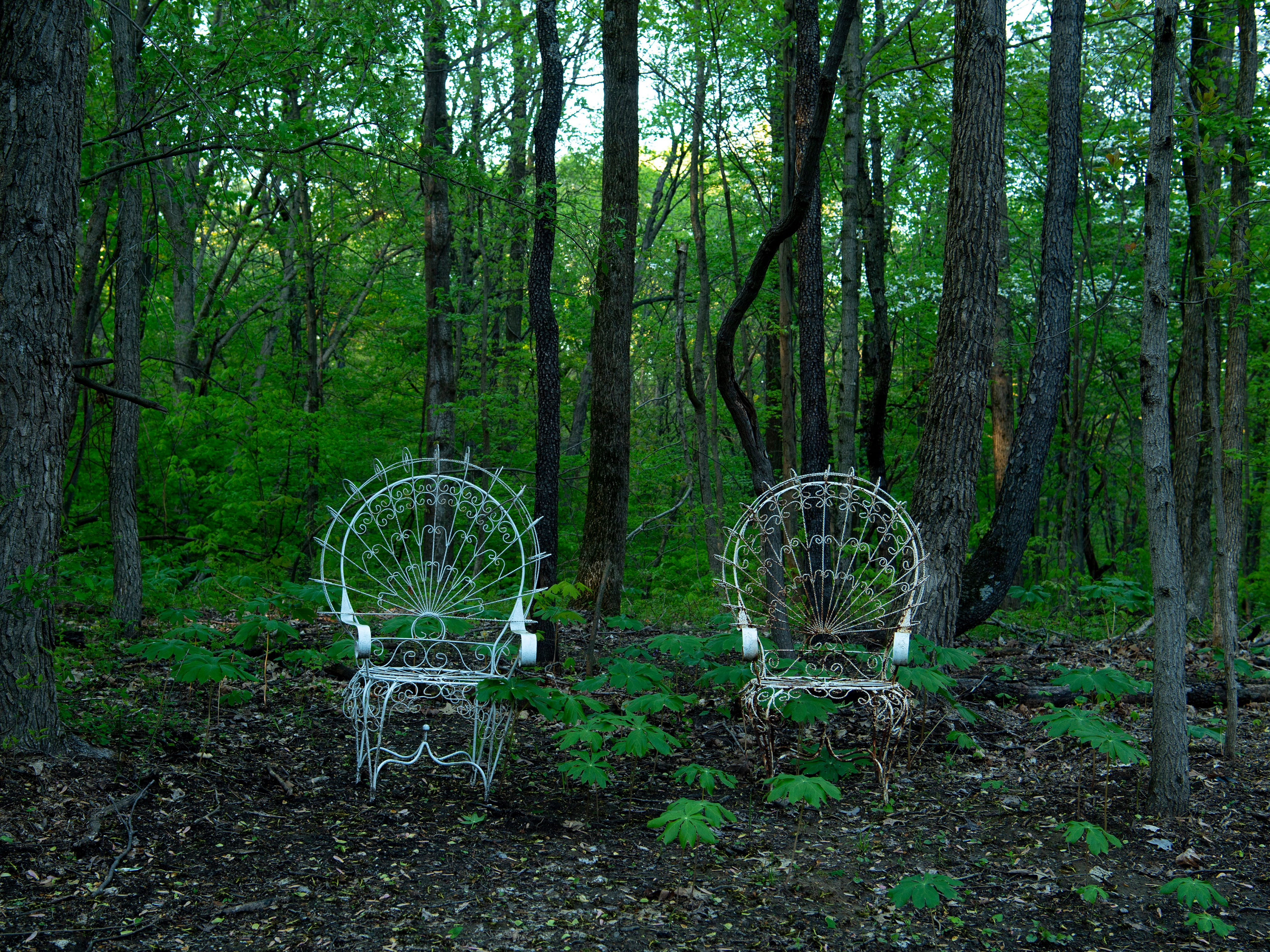Metal chairs are part of the decor at the Azalea Path Arboretum and Botanical Gardens in Pike County, Ind., Friday, April 26, 2019. The facility was started by Beverly Knight in 1979 on 15 acres and has grown to more than 60 acres and has about 500 varieties of the flower.