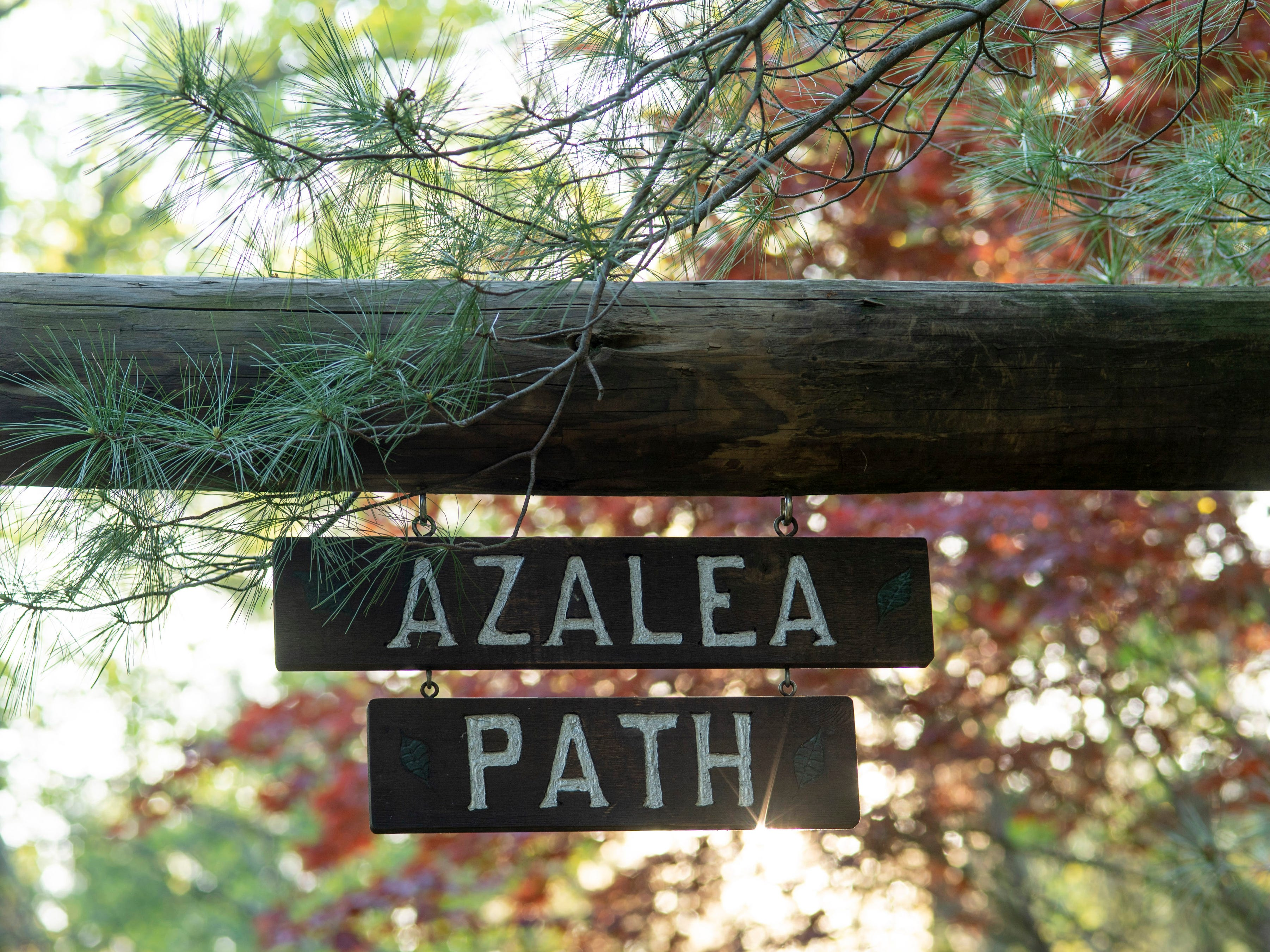 The Azalea Path Arboretum and Botanical Gardens was started by Beverly Knight in 1979 on 15 acres and has grown to more than 60 acres and has about 500 varieties of the flower.