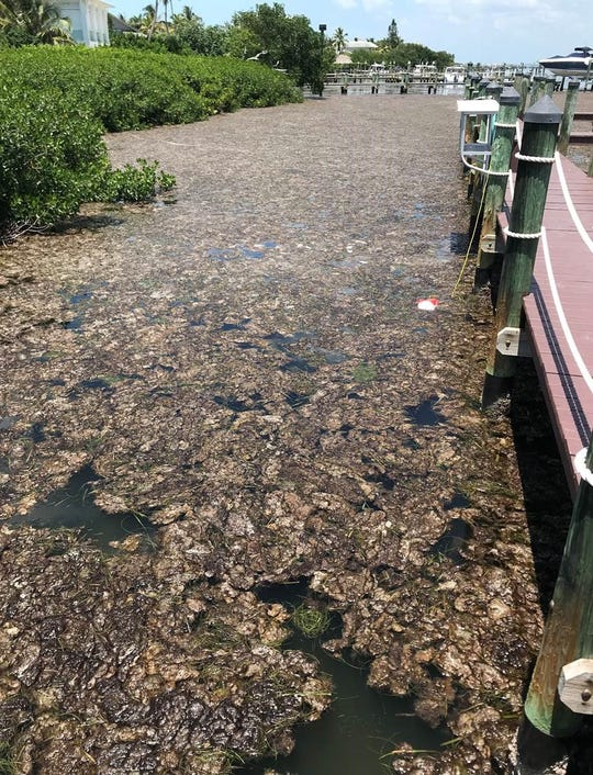Foul-smelling gunk fills Captiva's Roosevelt channel