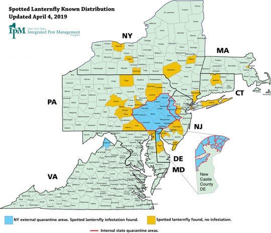 Despite quarantine efforts, lanternflies have been found in seven states