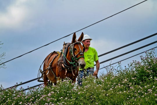 "The Peoples Rural Telephone Cooperative hired R.C. Hibbitts and his mule, ""Old Bub,"" to help string fiber-optic cable in the most rugged areas of eastern Kentucky's Jackson and Owsley counties."