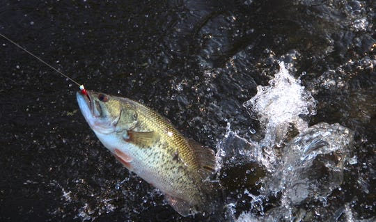 Anglers can target and keep largemouth bass statewide beginning Saturday, the opening of the 2019 Wisconsin fishing season.