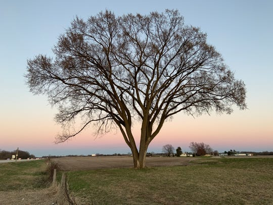 A stately elm stands alone on the south side of I-94 between Milwaukee and Madison near the Willow Glen Road exit in Jefferson County. Travelers sometimes stop and take photographs of the beautiful tree or picnic under its branches.