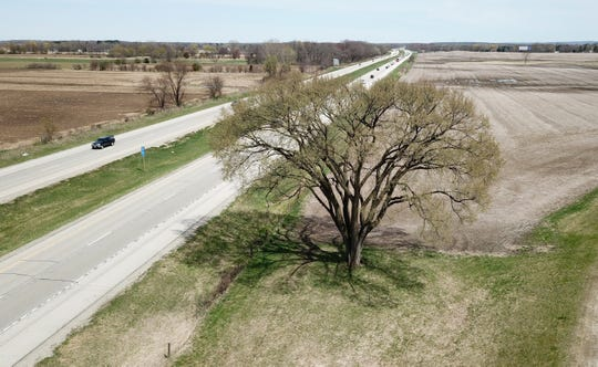 A drone image shows how close the elm tree is to traffic passing on I-94 in Jefferson County. The tree is almost exactly at the 277.0 mile marker.