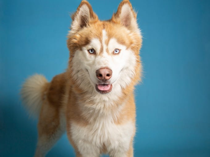 Adopt A Pet: Dogs And Cats In Metro Phoenix Shelters This Week