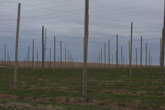 The field of poles at Herds to Hops Hop Farm on April 26, 2019.